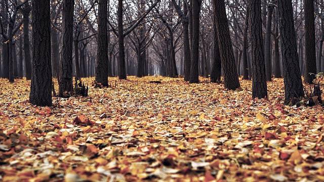 落ち葉と木立