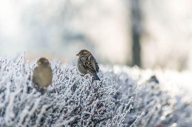 霜の上の小鳥