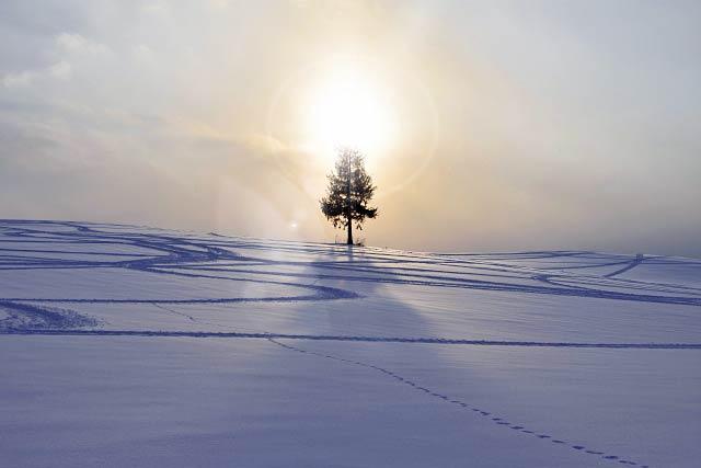 美瑛の木と太陽