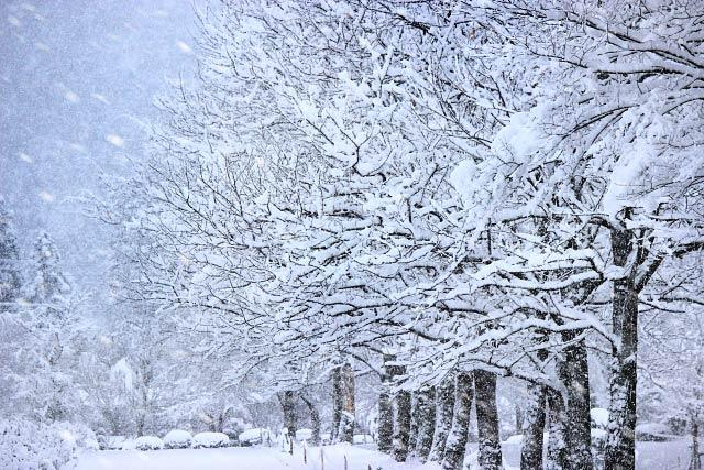 吹雪の木立