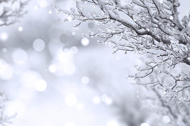 凍りつく枝と光