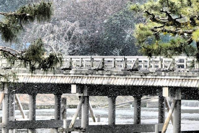 嵐山の桜に雪