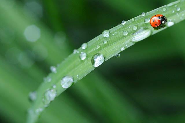 てんとう虫と雨粒