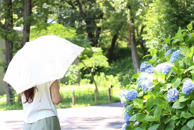 日傘の女性、アジサイ