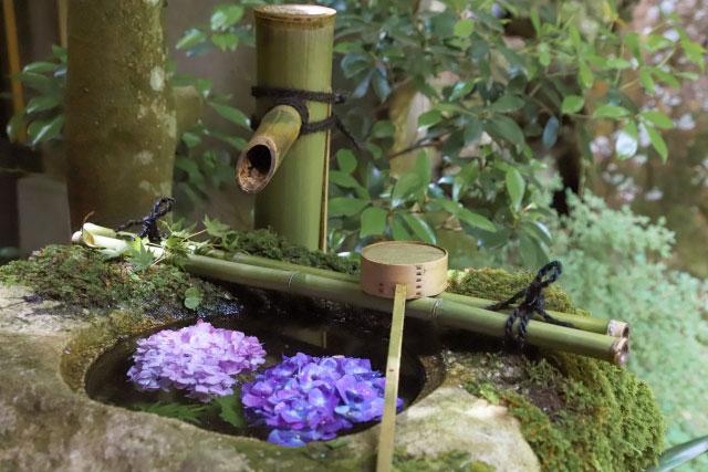 手水と紫陽花