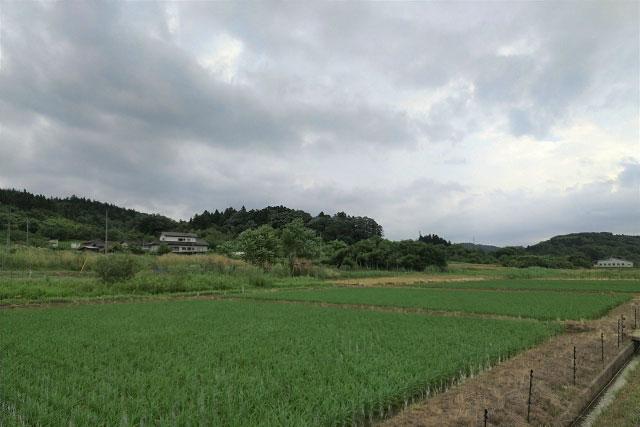 冷夏-黒雲と水田
