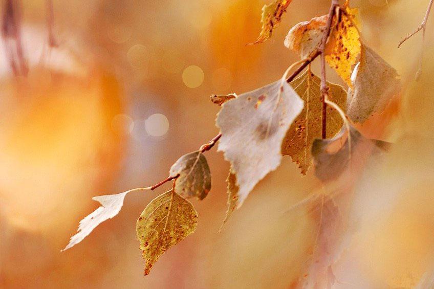 紅葉と枯れ葉